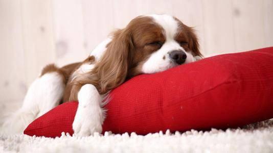 为什么睡觉时身体会突然抖一下?好奇妙 - R站|学习使我快乐! - 1