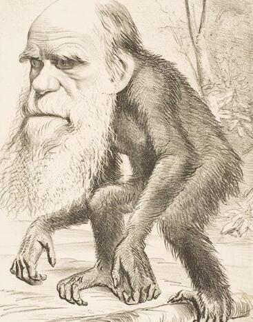 达尔文早知道进化论错了!化石根本没有进化过程 - R站|学习使我快乐! - 1