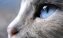 不服来辩:群众的眼睛是雪亮的?恰恰相反,群众的大多数最讽刺的自身缺陷就是盲目性。