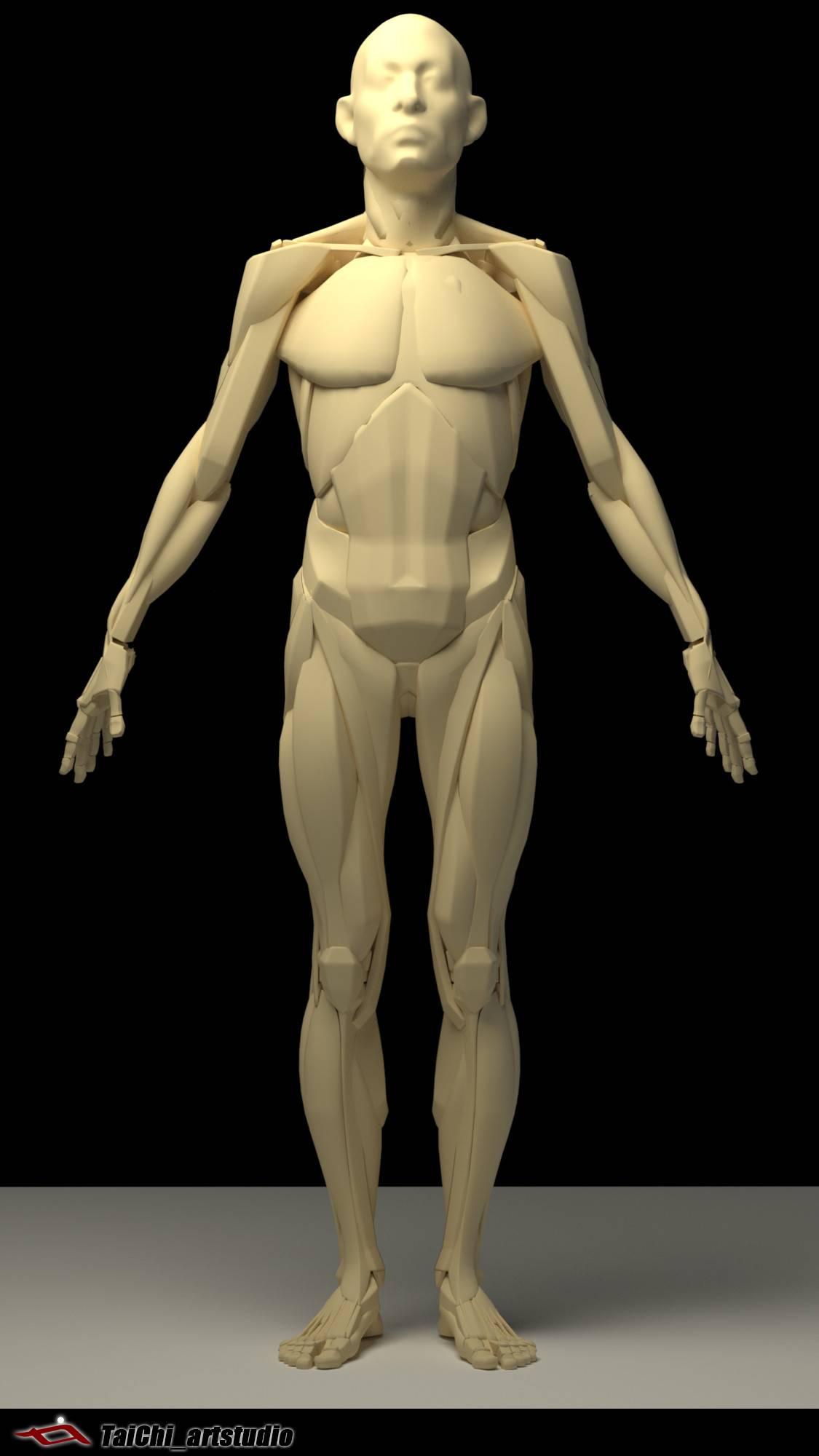 非常不错的人体分面图,美术练习的好东西! - R 站 学习使我快乐! - 15