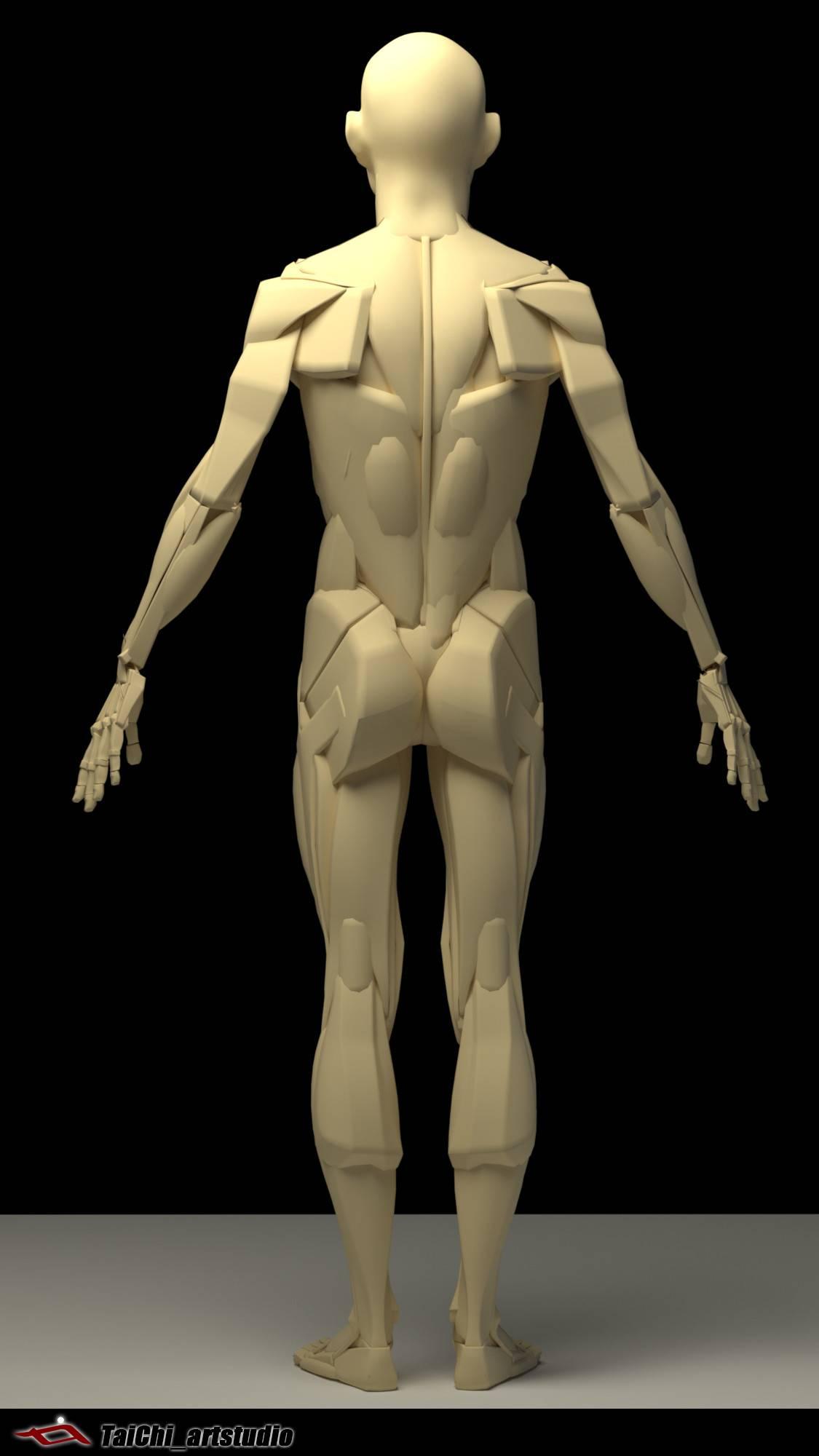 非常不错的人体分面图,美术练习的好东西! - R站|学习使我快乐! - 16