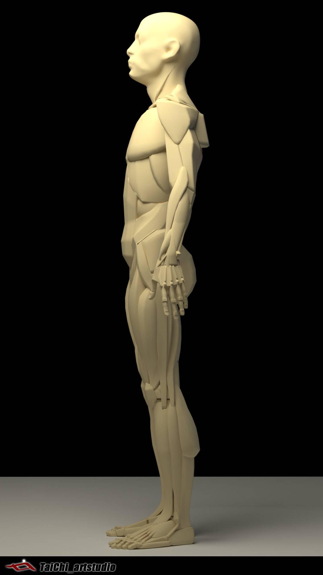 非常不错的人体分面图,美术练习的好东西! - R站|学习使我快乐! - 17