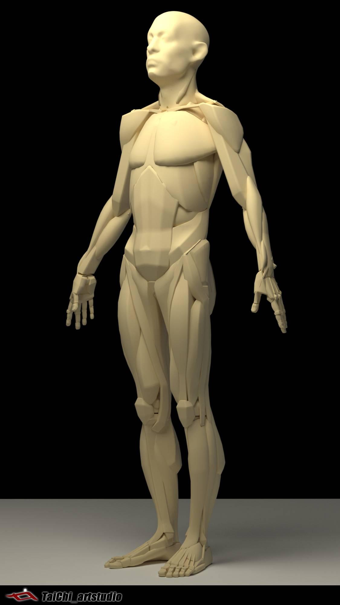 非常不错的人体分面图,美术练习的好东西! - R 站 学习使我快乐! - 18