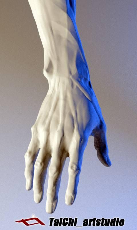 非常不错的人体分面图,美术练习的好东西! - R 站 学习使我快乐! - 29