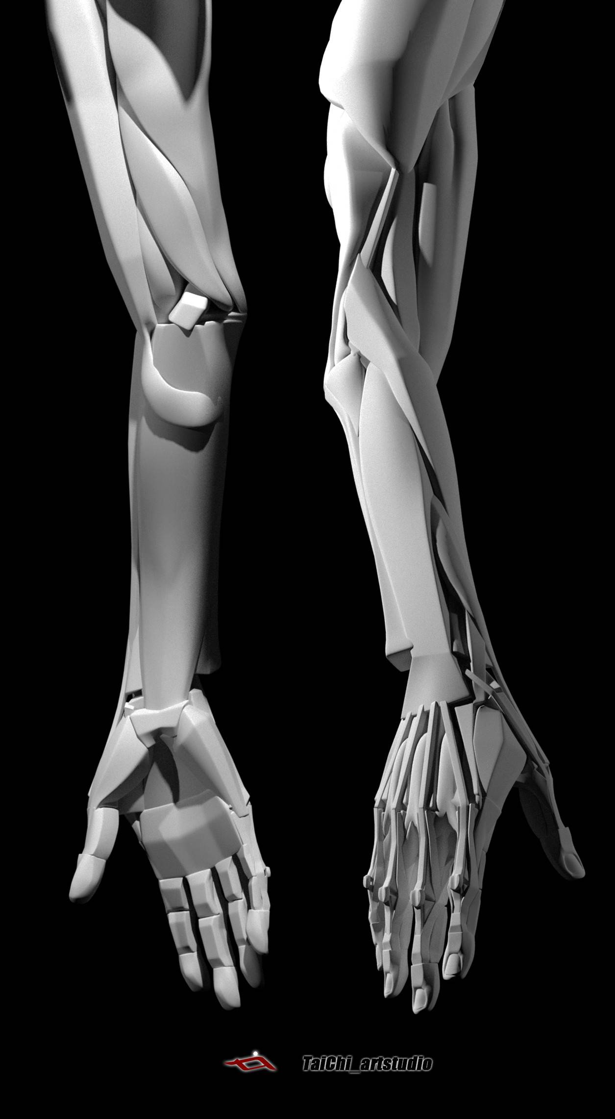 非常不错的人体分面图,美术练习的好东西! - R站|学习使我快乐! - 30