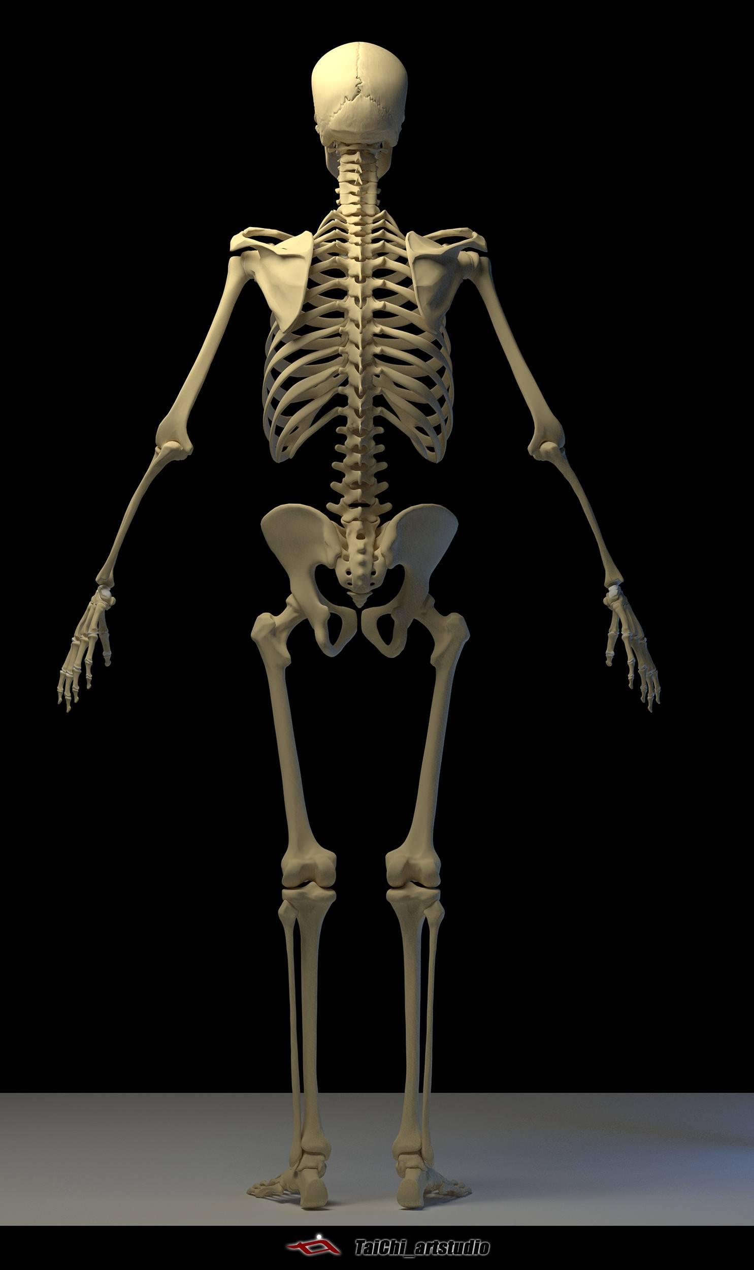 非常不错的人体分面图,美术练习的好东西! - R 站 学习使我快乐! - 32