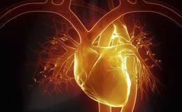 美国科学家揭开终极底牌:重大的发现,癌症自愈源于心脏