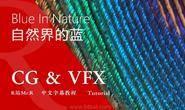 【R站译制】中文字幕 CG&VFX 《为何蓝色在自然界中如此罕见》Blue In Nature 视频教程 免费观看