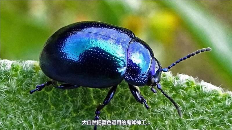 【R站译制】中文字幕 CG&VFX 《为何蓝色在自然界中如此罕见》Blue In Nature 视频教程 免费观看 - R站|学习使我快乐! - 3