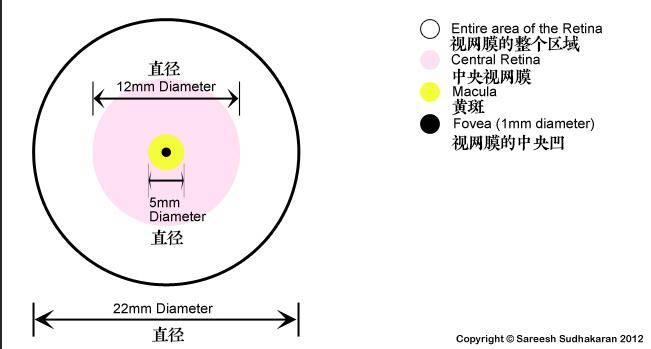 Dr. Optoglass 日志:人类眼睛构成、视觉原理、色彩空间等解析 - R站|学习使我快乐! - 4