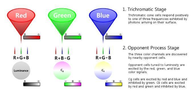 Dr. Optoglass 日志:人类眼睛构成、视觉原理、色彩空间等解析 - R站|学习使我快乐! - 9