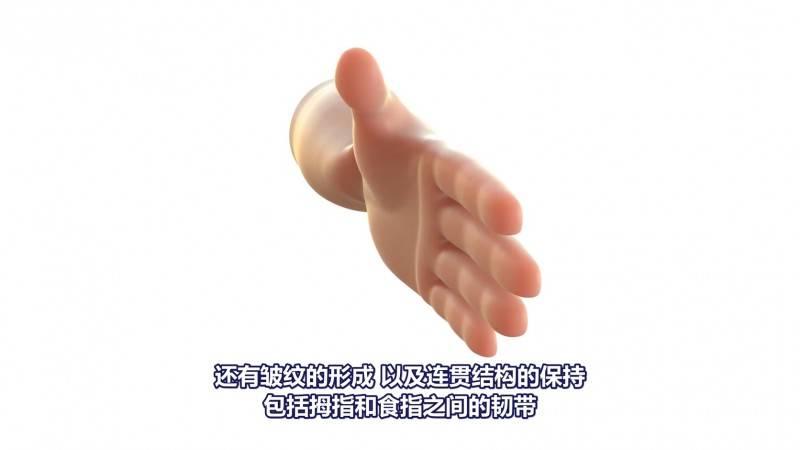 【R站译制】中文字幕 CG&VFX《稳定的新胡克肌肉模拟》Neo-Hookean 来自皮克斯的技术 视频教程 免费观看 - R站|学习使我快乐! - 3
