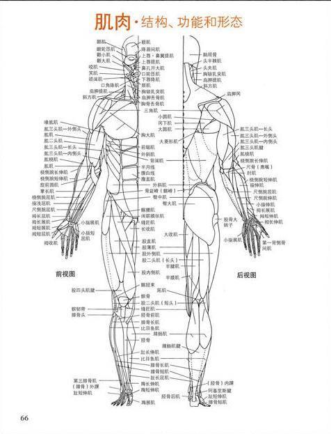 设计书籍:艾略特·古德芬《牛津艺用人体解剖学》经典中文版 [Human Anatomy For Artists] [PDF格式] - R站|学习使我快乐! - 2