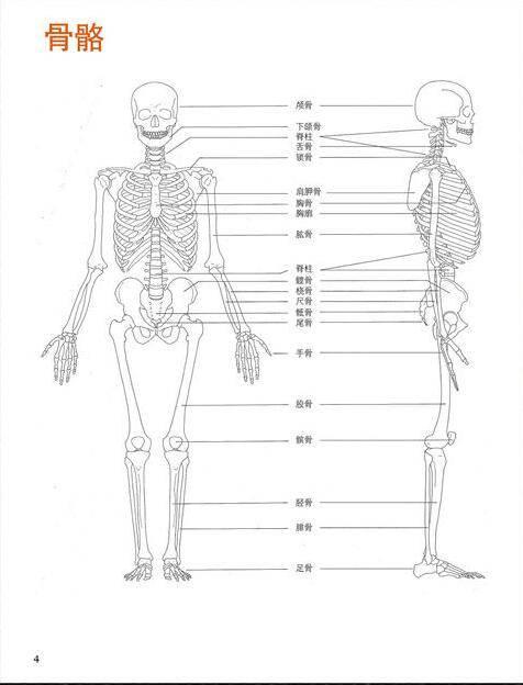 设计书籍:艾略特·古德芬《牛津艺用人体解剖学》经典中文版 [Human Anatomy For Artists] [PDF格式] - R站|学习使我快乐! - 4