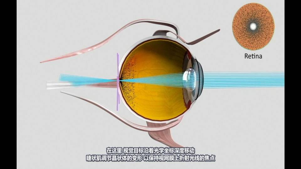 【R站译制】中文字幕 CG&VFX《仿生眼部模型与深度神经肌肉动眼神经控制》 Eye Modeling & Control 视频教程 免费观看 - R站|学习使我快乐! - 2