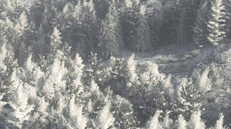 【VIP专享】C4D教程《Octane宝典》冬季森林自然雪景制作流程解析 Winter Forest 视频教程 - R站|学习使我快乐! - 2