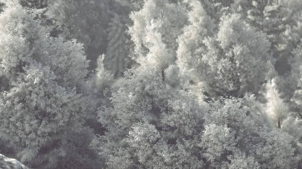 【VIP专享】C4D教程《Octane宝典》冬季森林自然雪景制作流程解析 Winter Forest 视频教程 - R站|学习使我快乐! - 3