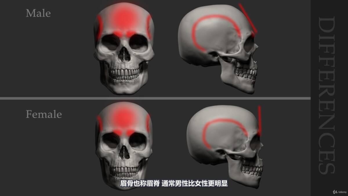 【R站译制】中文字幕 《藝用人體解剖學》人物角色绘画、建模、雕刻必备硬核姿势 Human Anatomy for Artists 视频教程 - R站|学习使我快乐! - 12