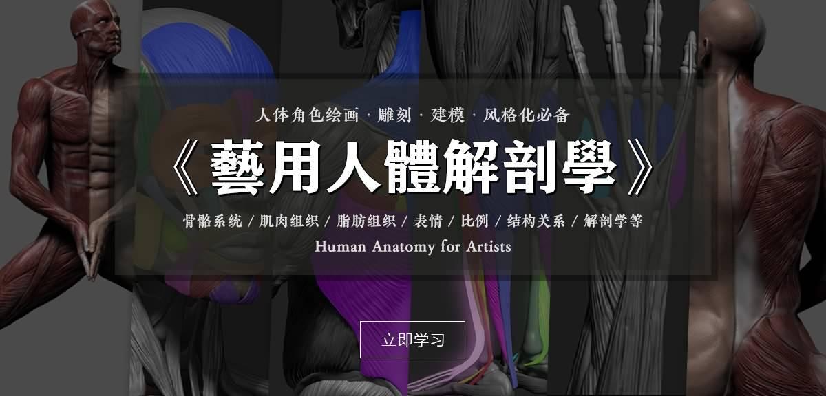 【R站译制】中文字幕 《藝用人體解剖學》人物角色绘画、建模、雕刻必备硬核姿势 Human Anatomy for Artists 视频教程 - R站|学习使我快乐! - 2