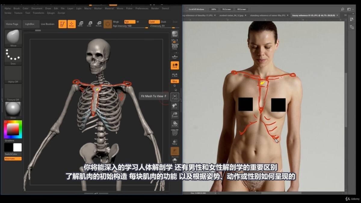 【R站译制】中文字幕 《藝用人體解剖學》人物角色绘画、建模、雕刻必备硬核姿势 Human Anatomy for Artists 视频教程 - R站|学习使我快乐! - 4