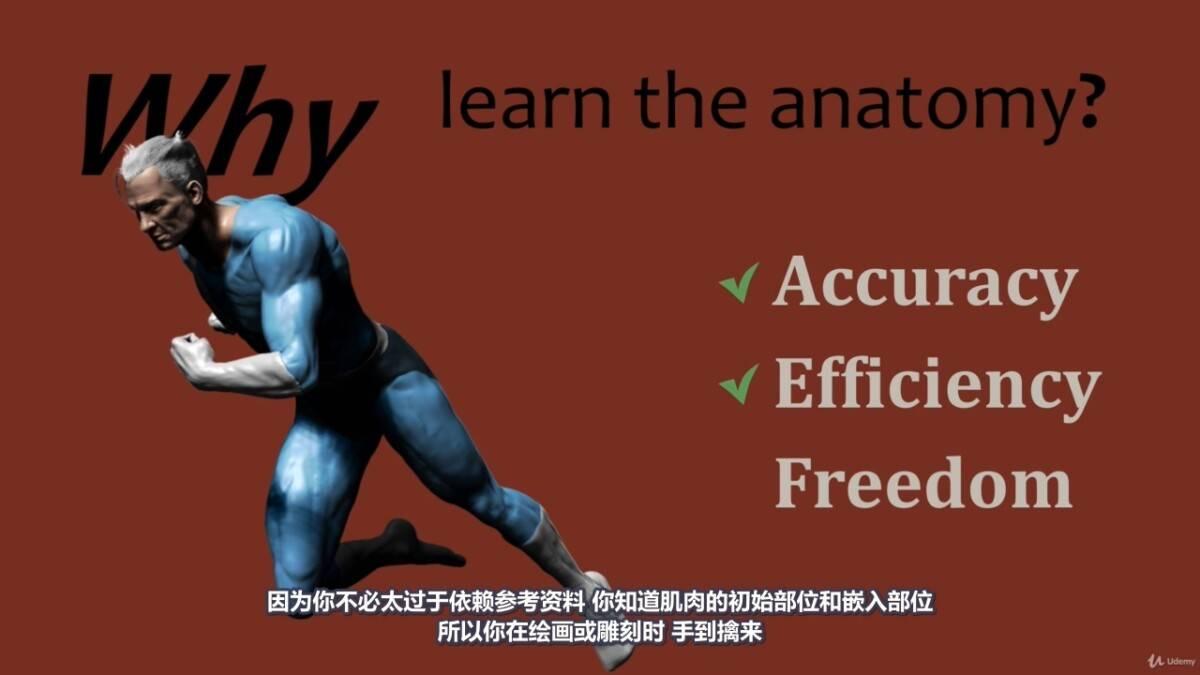 【R站译制】中文字幕 《藝用人體解剖學》人物角色绘画、建模、雕刻必备硬核姿势 Human Anatomy for Artists 视频教程 - R站|学习使我快乐! - 8