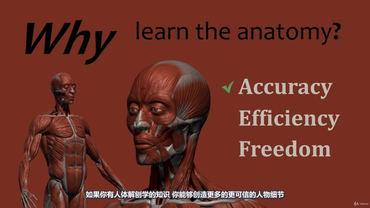 【R站译制】中文字幕 《藝用人體解剖學》人物角色绘画、建模、雕刻必备硬核姿势 Human Anatomy for Artists 视频教程 - R站|学习使我快乐! - 6