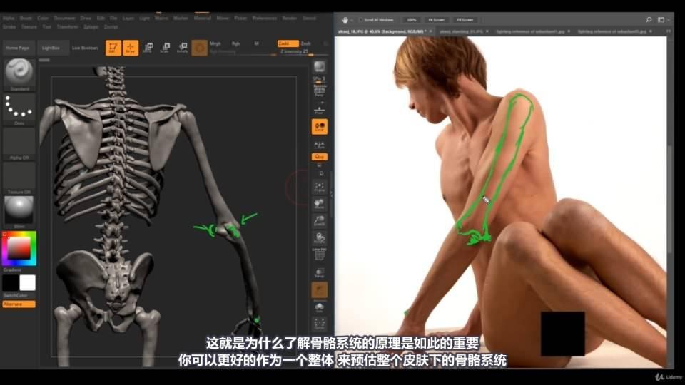 【R站译制】中文字幕 《藝用人體解剖學》人物角色绘画、建模、雕刻必备硬核姿势 Human Anatomy for Artists 视频教程 - R站|学习使我快乐! - 24