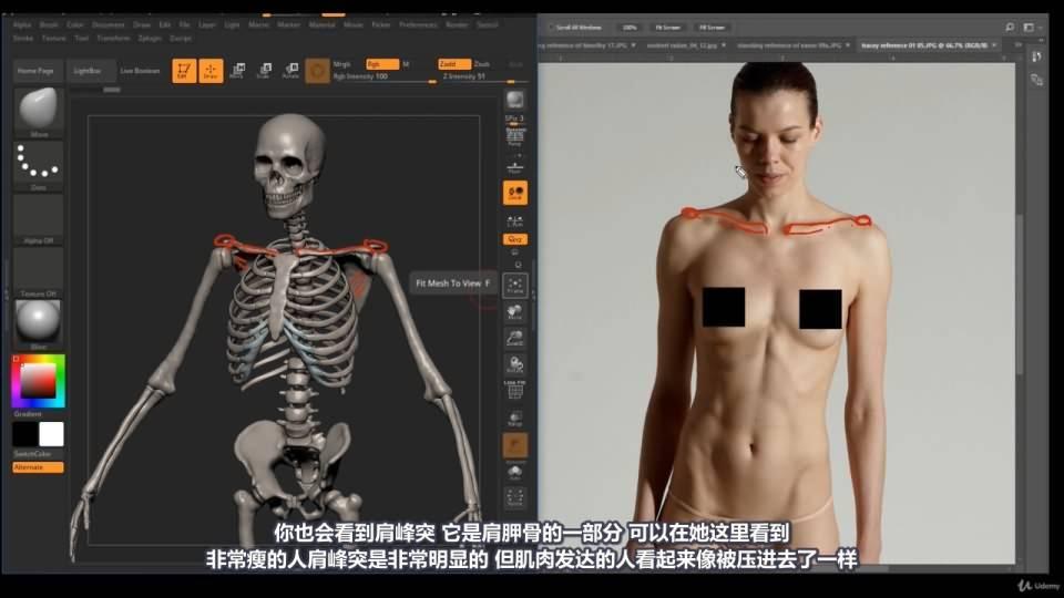 【R站译制】中文字幕 《藝用人體解剖學》人物角色绘画、建模、雕刻必备硬核姿势 Human Anatomy for Artists 视频教程 - R站|学习使我快乐! - 28