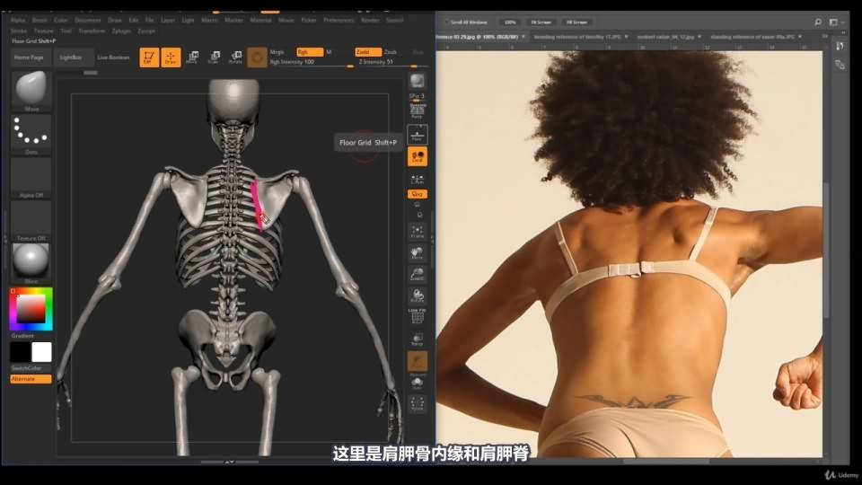 【R站译制】中文字幕 《藝用人體解剖學》人物角色绘画、建模、雕刻必备硬核姿势 Human Anatomy for Artists 视频教程 - R站|学习使我快乐! - 29