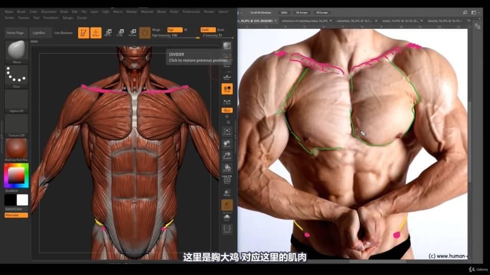 【R站译制】中文字幕 《藝用人體解剖學》人物角色绘画、建模、雕刻必备硬核姿势 Human Anatomy for Artists 视频教程 - R站|学习使我快乐! - 32