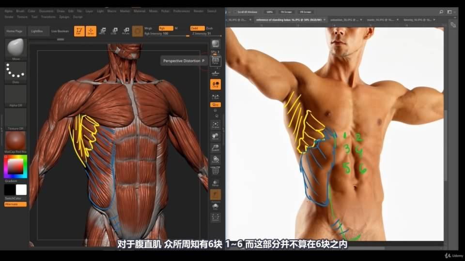 【R站译制】中文字幕 《藝用人體解剖學》人物角色绘画、建模、雕刻必备硬核姿势 Human Anatomy for Artists 视频教程 - R站|学习使我快乐! - 33