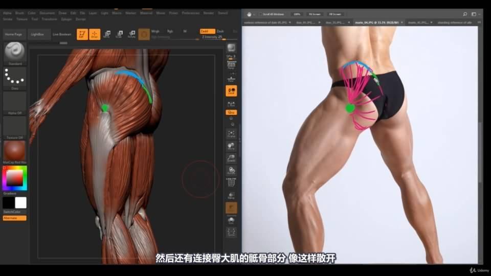 【R站译制】中文字幕 《藝用人體解剖學》人物角色绘画、建模、雕刻必备硬核姿势 Human Anatomy for Artists 视频教程 - R站|学习使我快乐! - 35