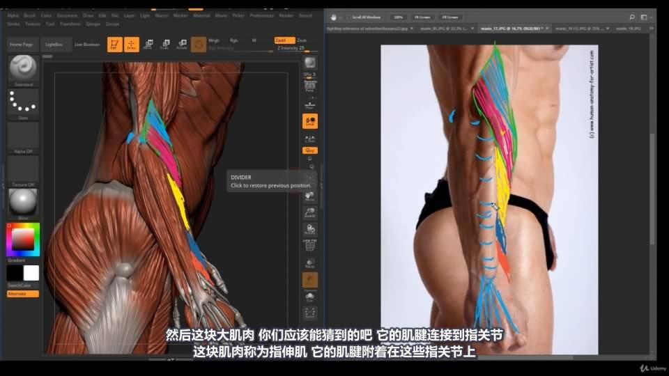 【R站译制】中文字幕 《藝用人體解剖學》人物角色绘画、建模、雕刻必备硬核姿势 Human Anatomy for Artists 视频教程 - R站|学习使我快乐! - 36