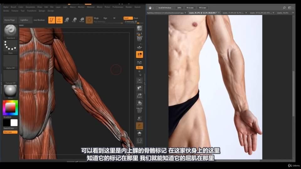 【R站译制】中文字幕 《藝用人體解剖學》人物角色绘画、建模、雕刻必备硬核姿势 Human Anatomy for Artists 视频教程 - R站|学习使我快乐! - 37