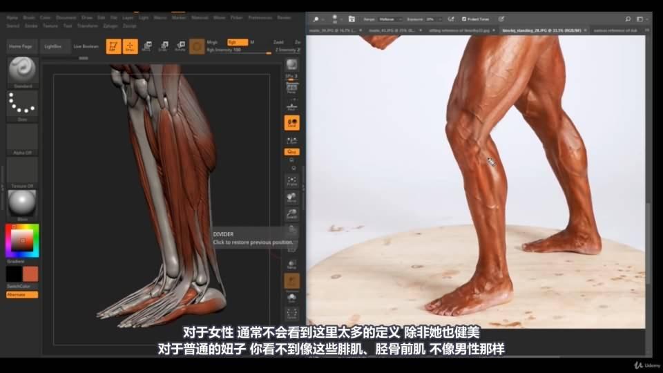 【R站译制】中文字幕 《藝用人體解剖學》人物角色绘画、建模、雕刻必备硬核姿势 Human Anatomy for Artists 视频教程 - R站|学习使我快乐! - 38