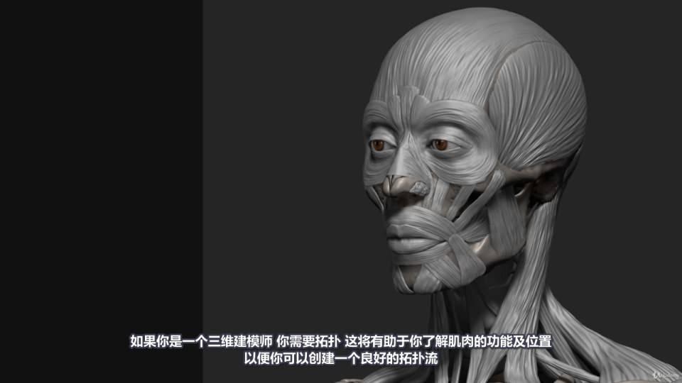 【R站译制】中文字幕 《藝用人體解剖學》人物角色绘画、建模、雕刻必备硬核姿势 Human Anatomy for Artists 视频教程 - R站|学习使我快乐! - 40